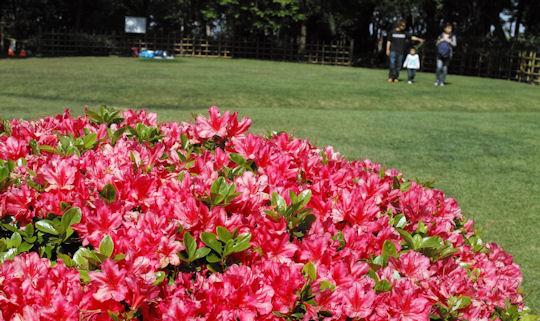 shibusawagarden.jpg